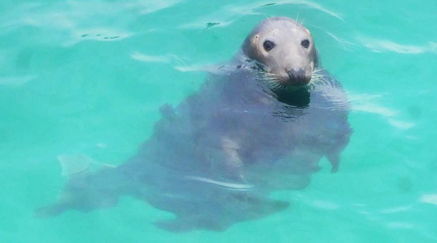 Seal in Cornwall