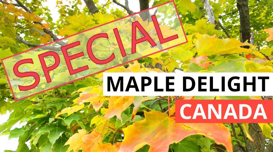 Maple delight canada special